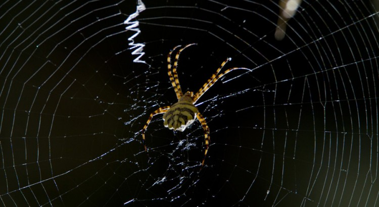 Orb Spider at Jonkershoek