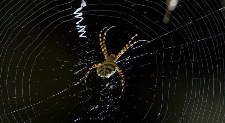 Orb Spider at Jonkershoek