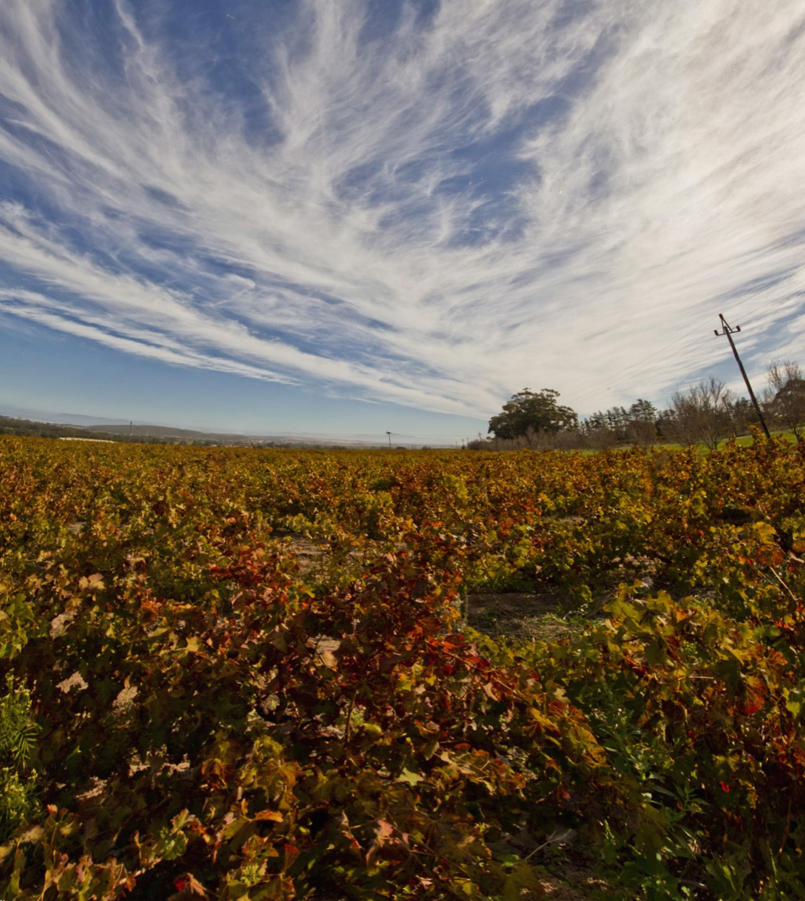 somerset west winelands