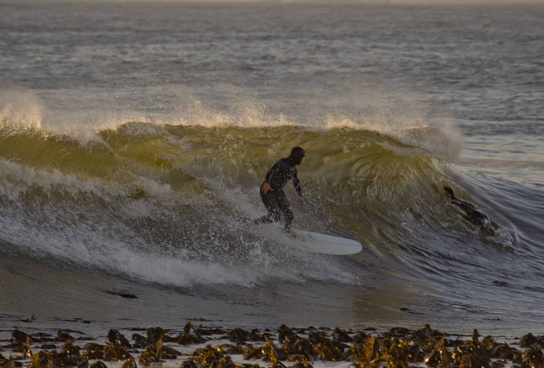 Surfer at Sea Point