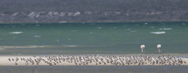birds-west-coast-national-park