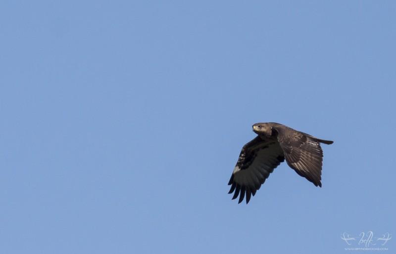 Steppe in flight