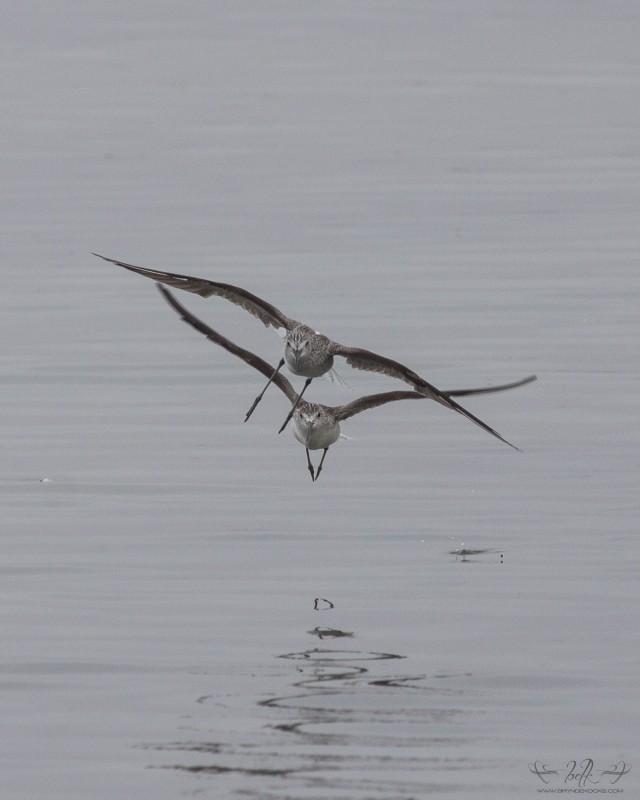 waders-in-flight