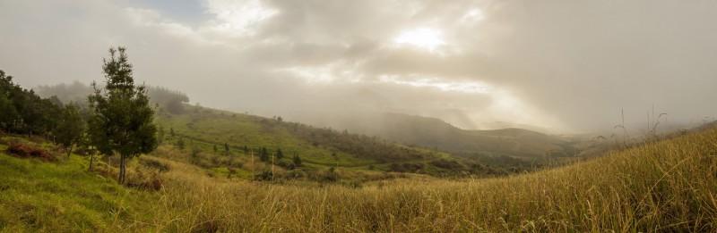Grootvadersbosch Rainy Landscape