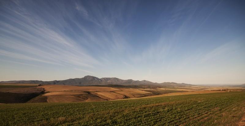 Overberg Landscape