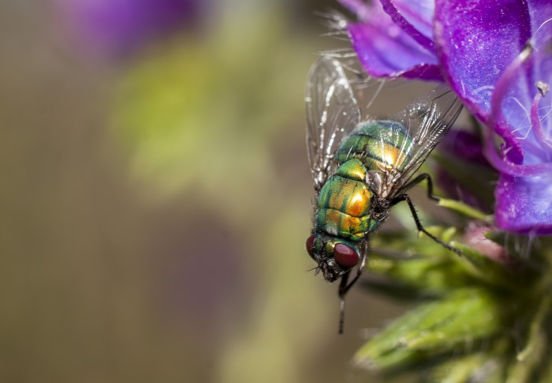 Macro Fly Extension Tubes