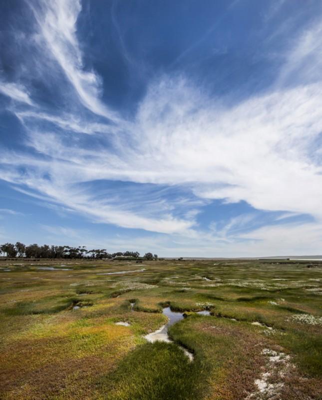 geelbek-marshes