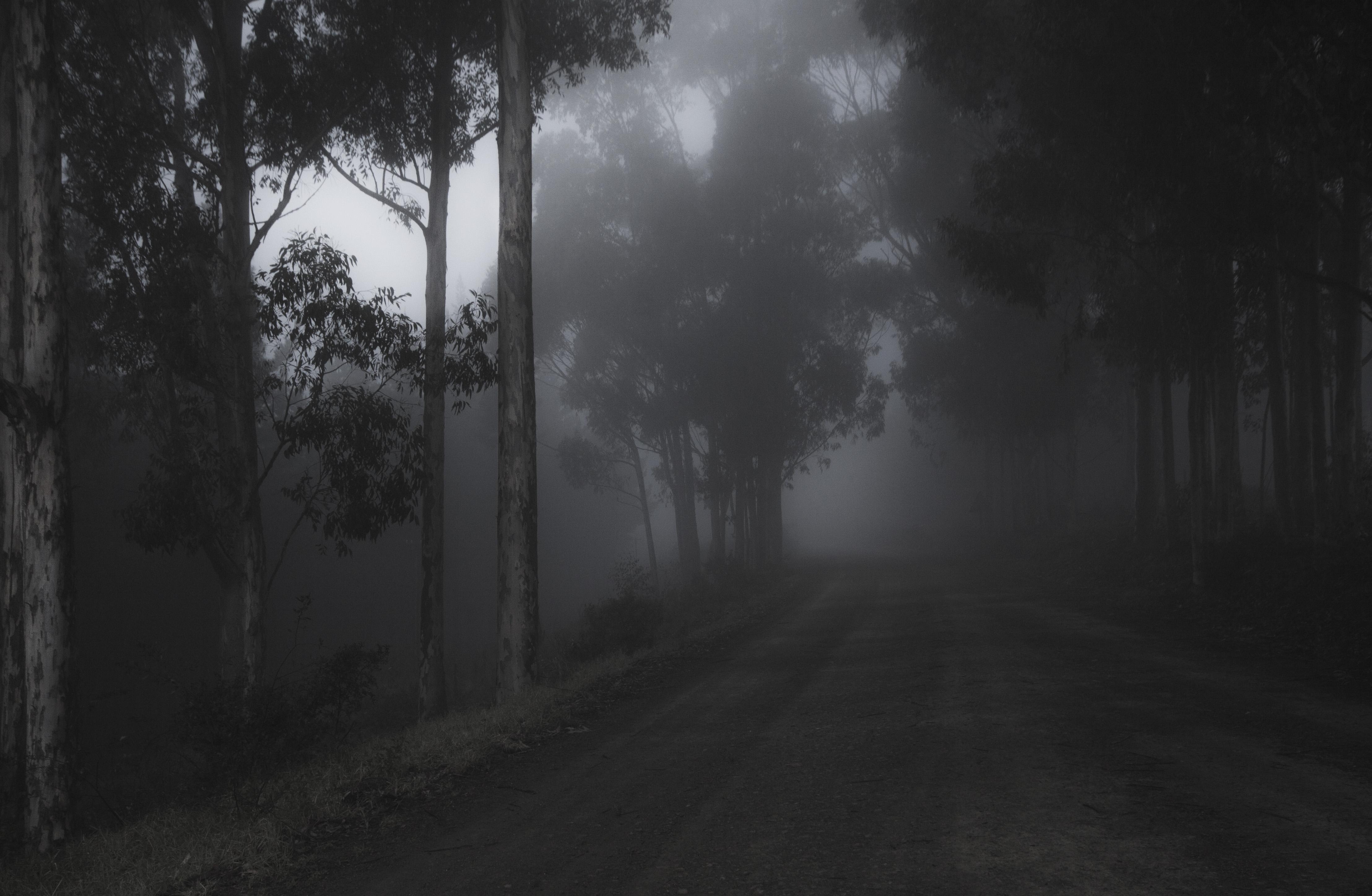 fog-trees