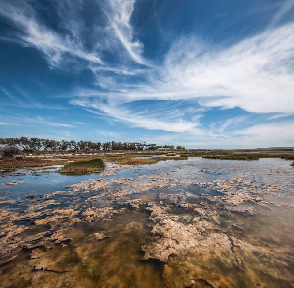 west-coast-marshes
