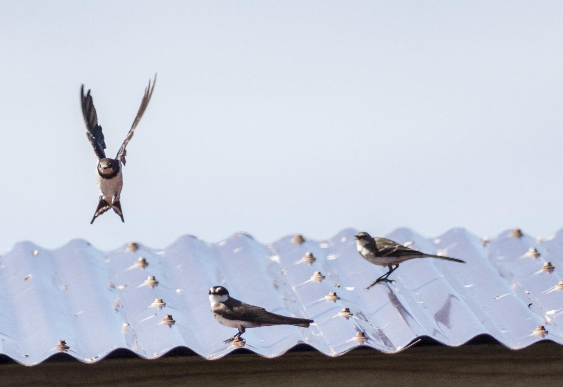 aerial-feeders