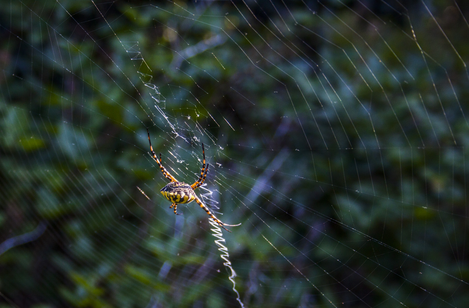 orb-web-spider