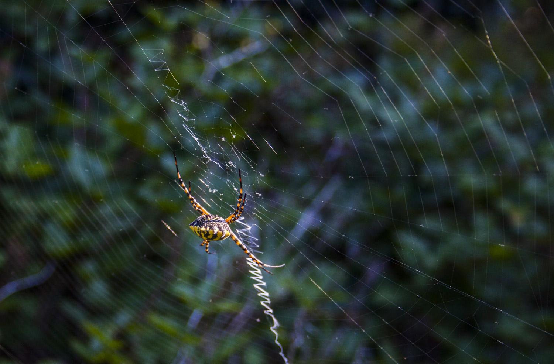orb-web-spider