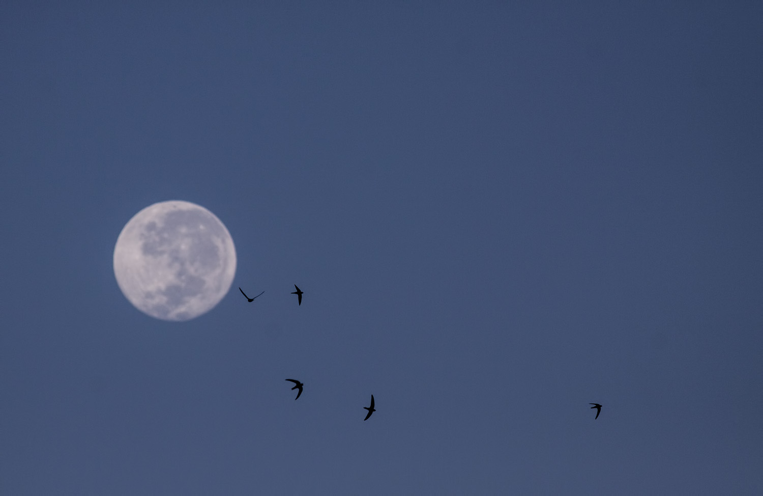 swifts-moon