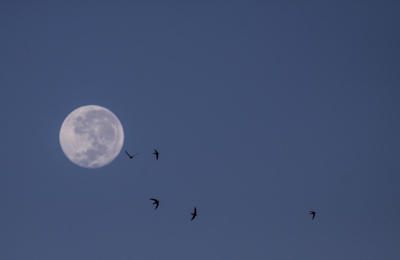 swifts-moon