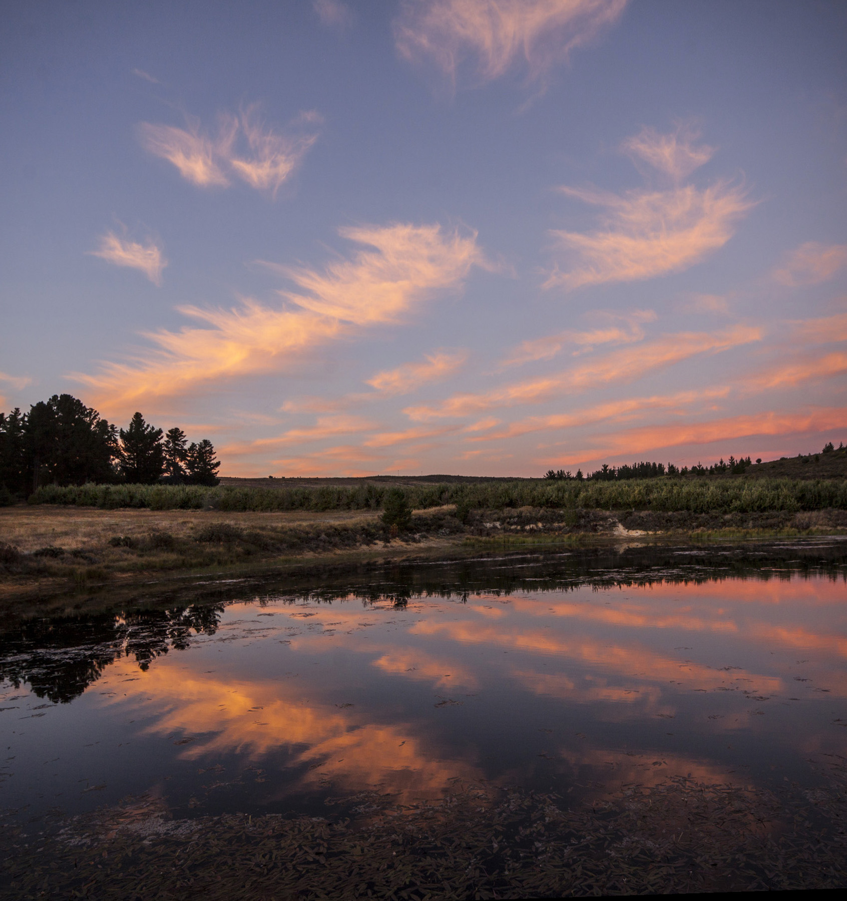 klondyke-cherry-farm-sunset