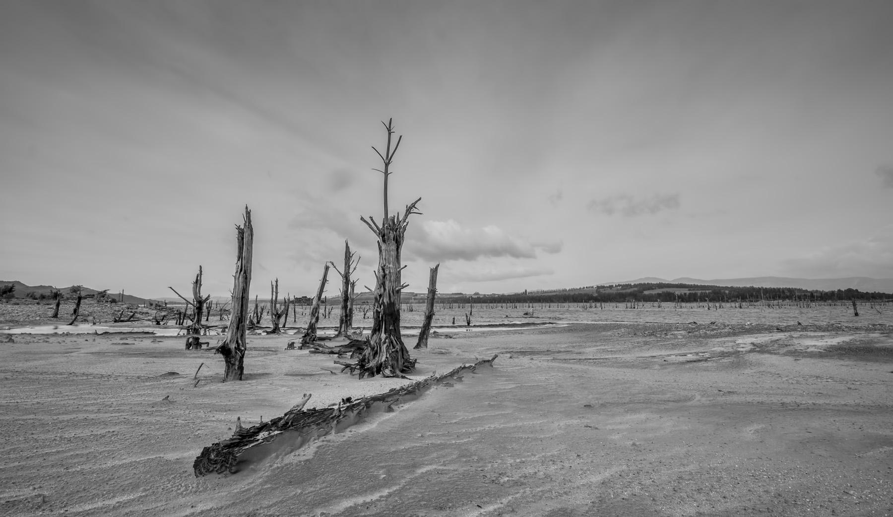 dead-trees-beach