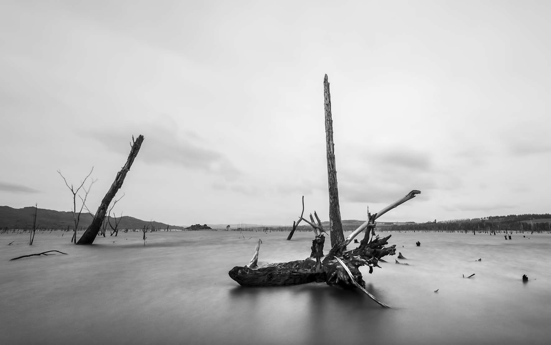 dead-trees-photography
