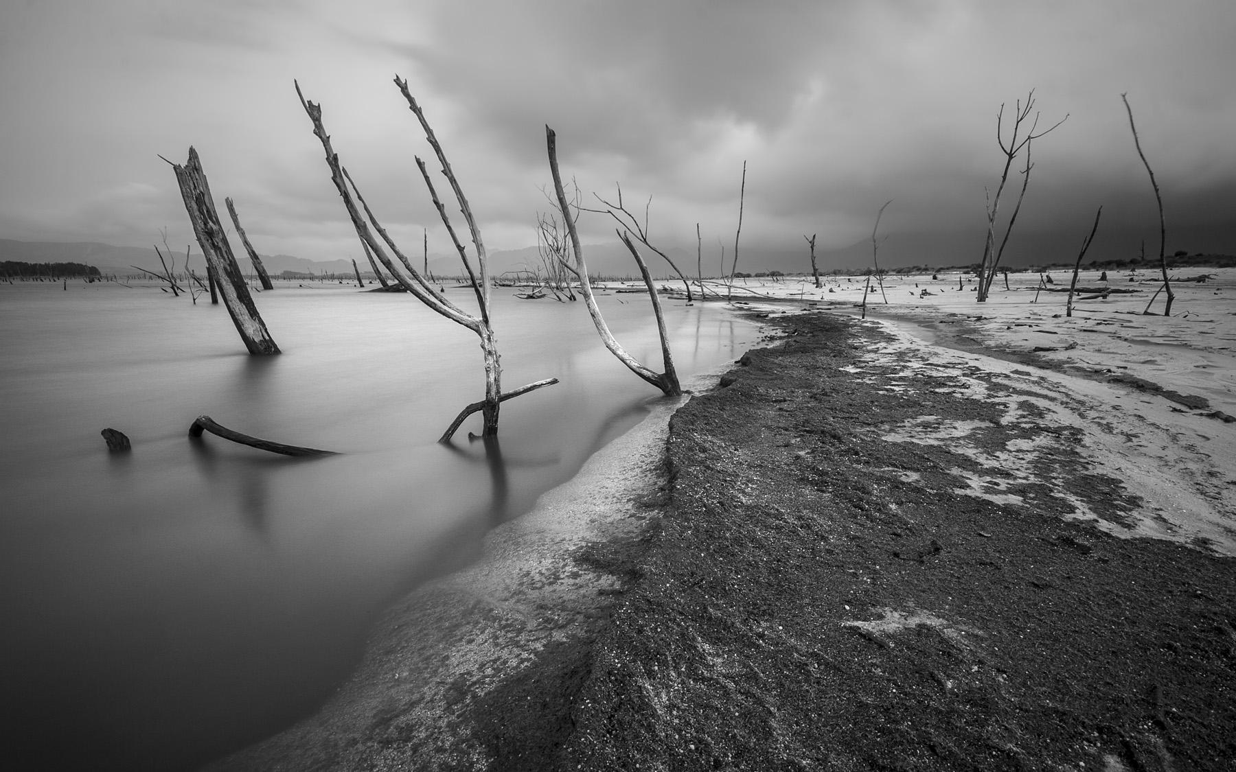 dead-trees-shore
