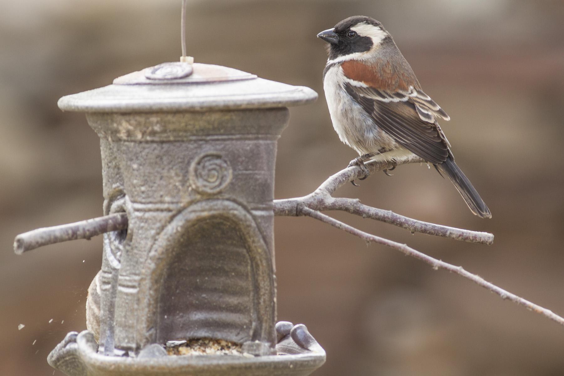 Birdfeeder Millstone