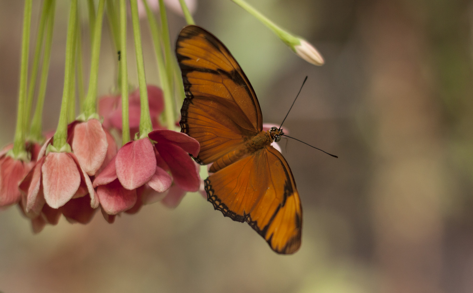 butterfly-world-2