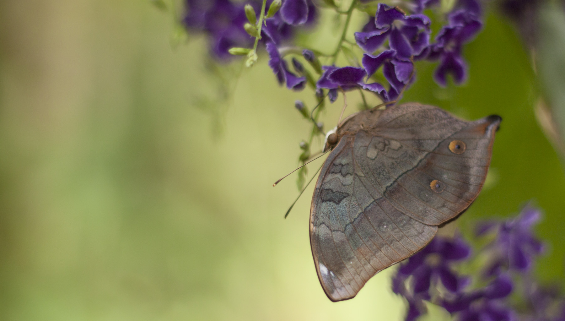 butterfly-world-4