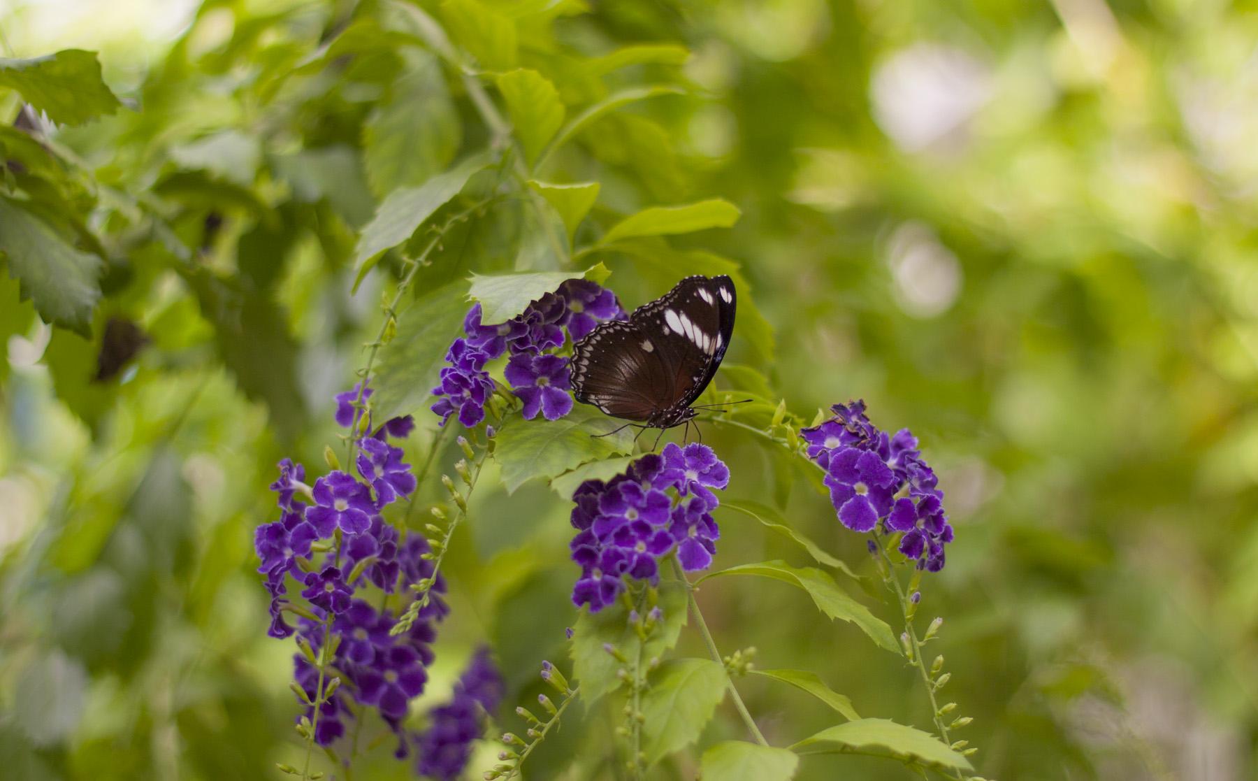 butterfly-world-5