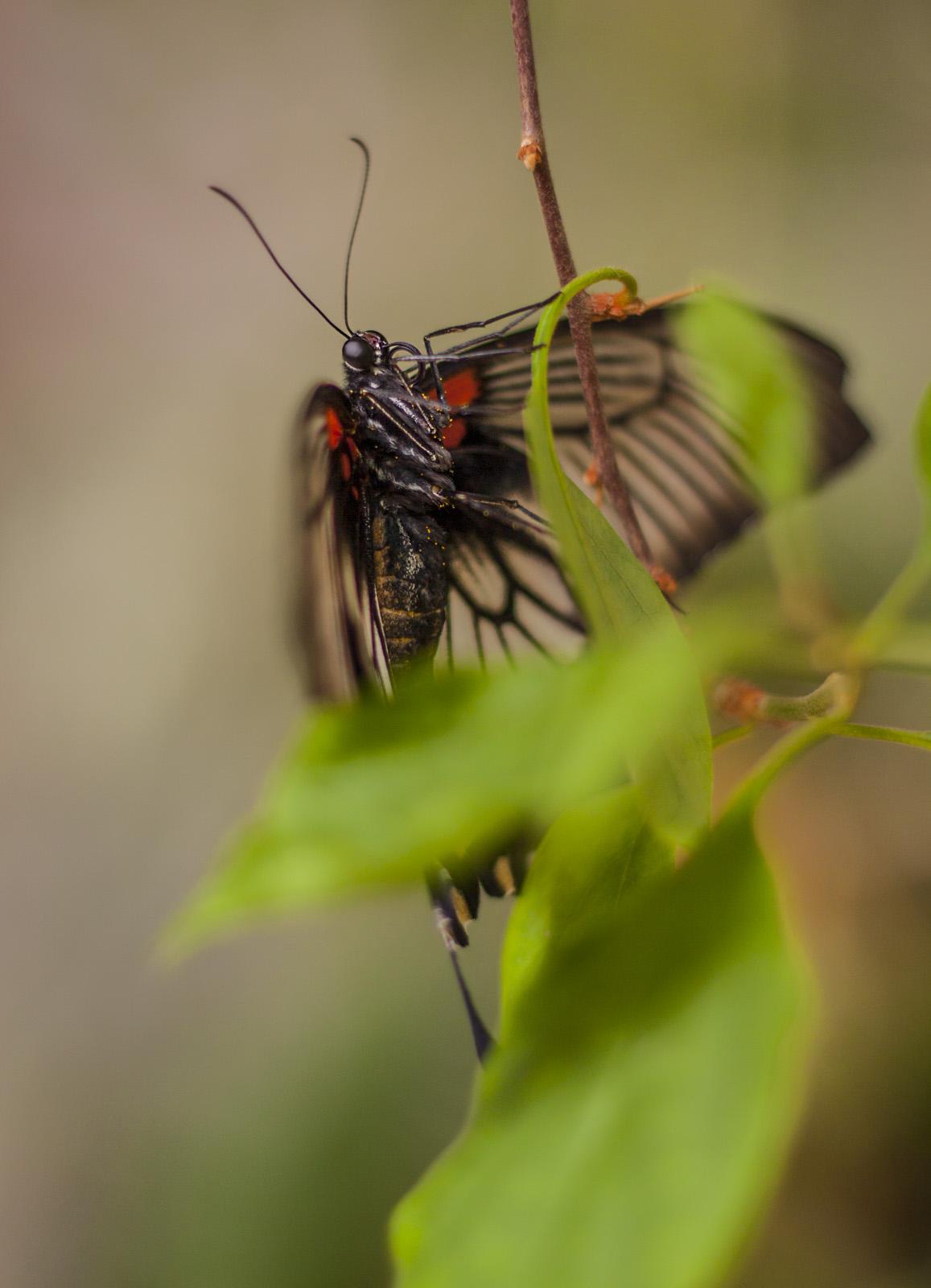 butterfly-world-6