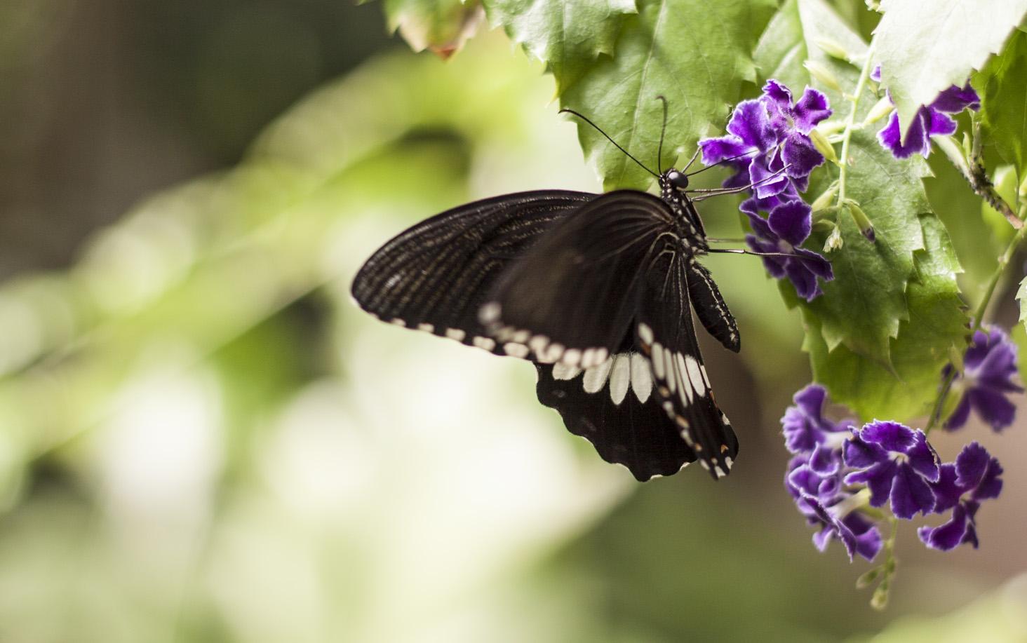 butterfly-world-8