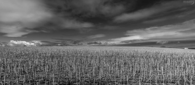 Field Landscape at De Hoop