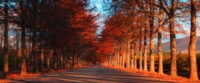 lourensford-autumn