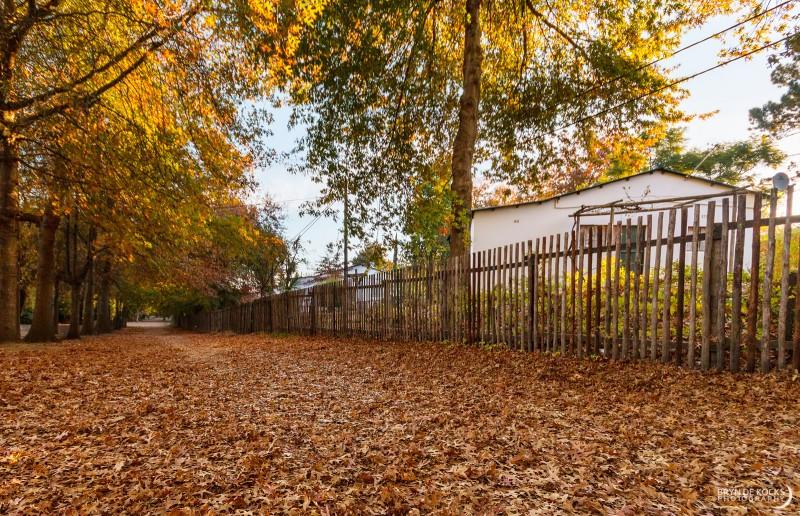 lourensford-autumn-leaves