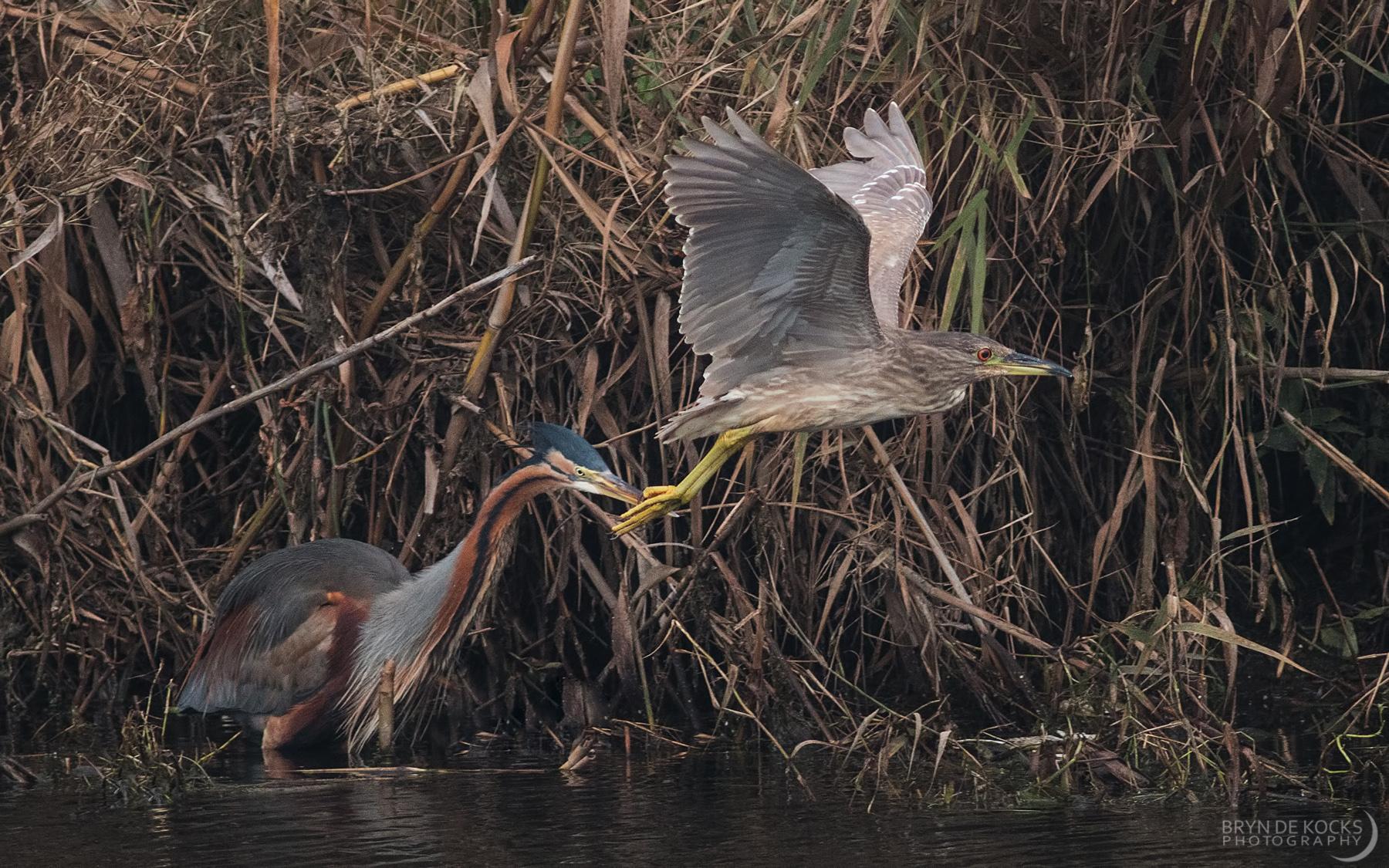 herons-black-river