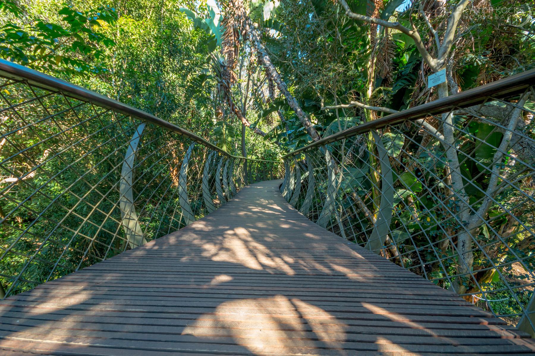 kirstenbosch-canopy-walk