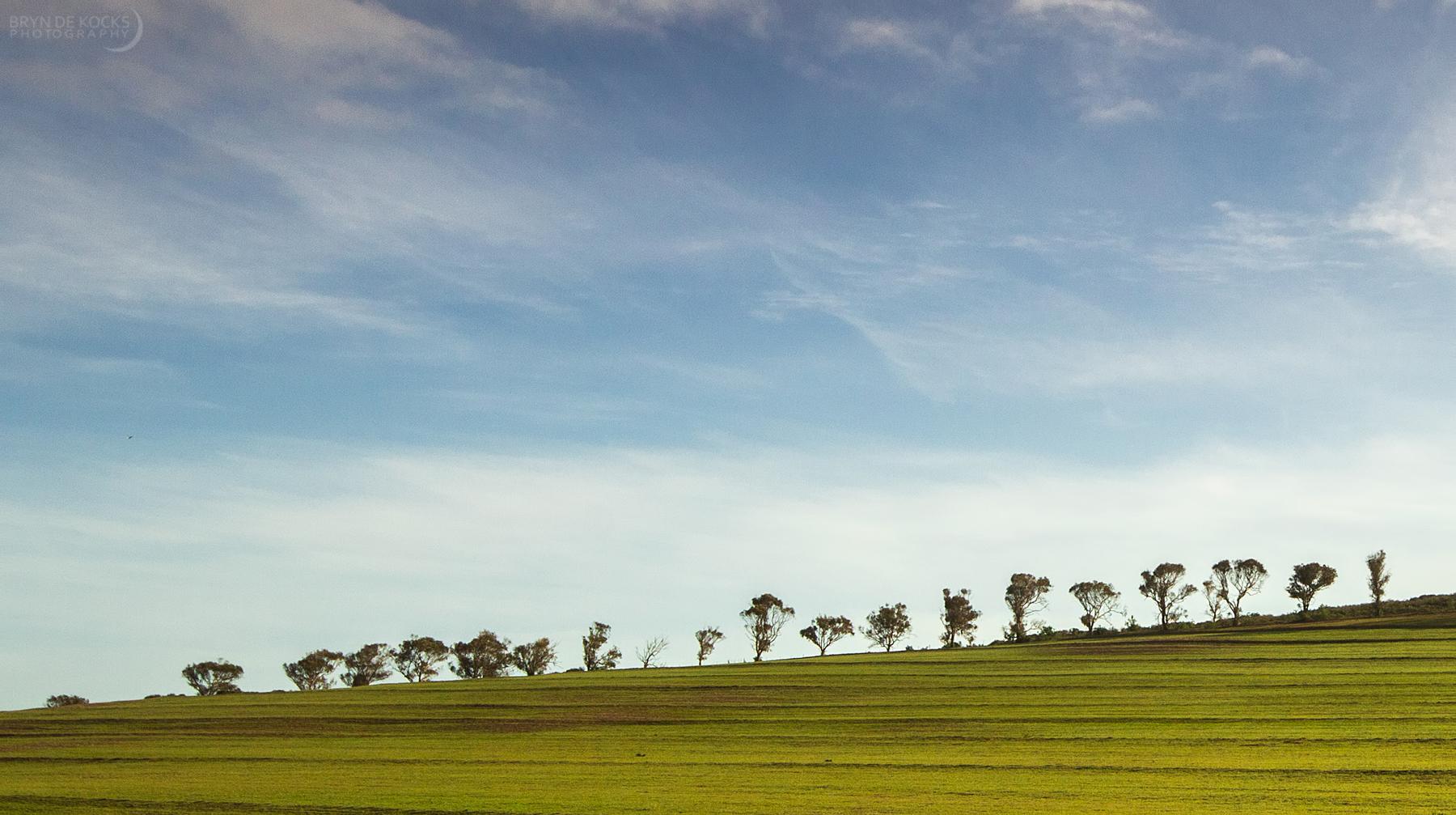 darling-landscape