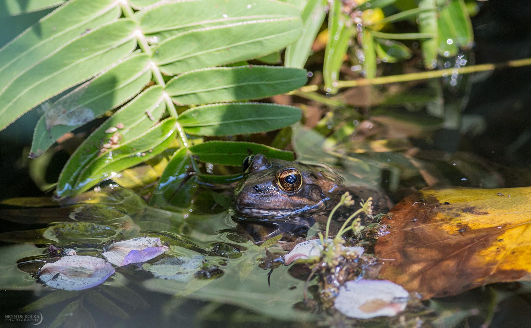 frog-kirstinbosch