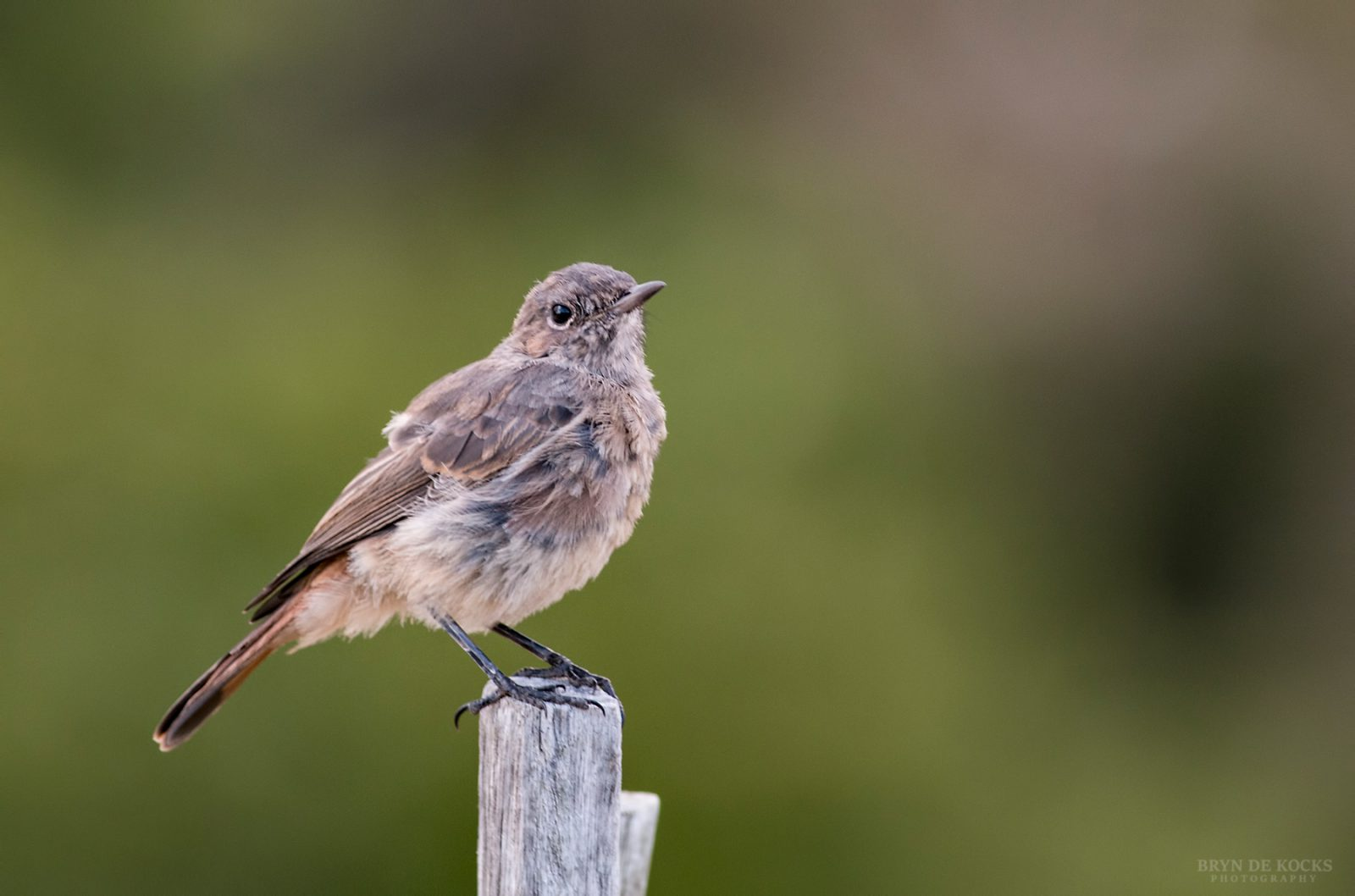 Familiar-Chat-young