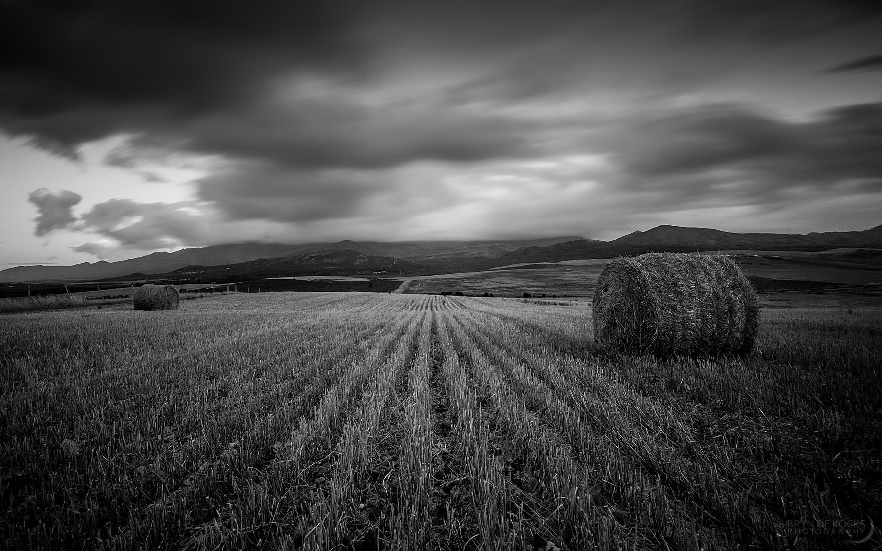 Bails of Hay Near Botrivier