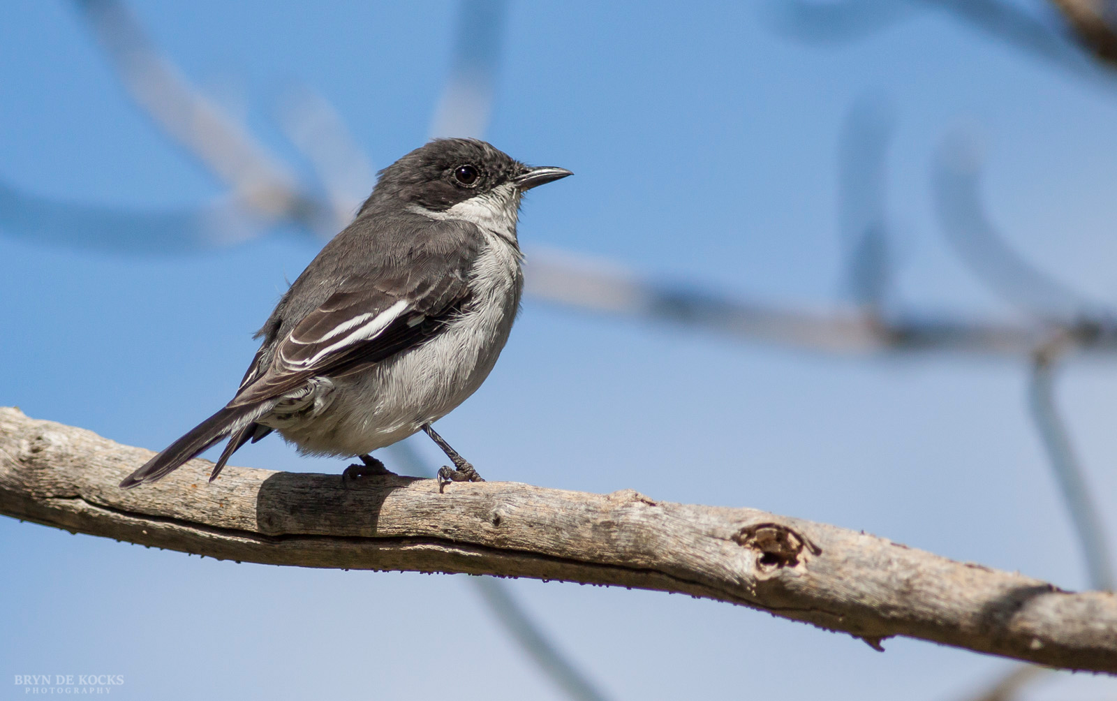 Common Fiscal Perched