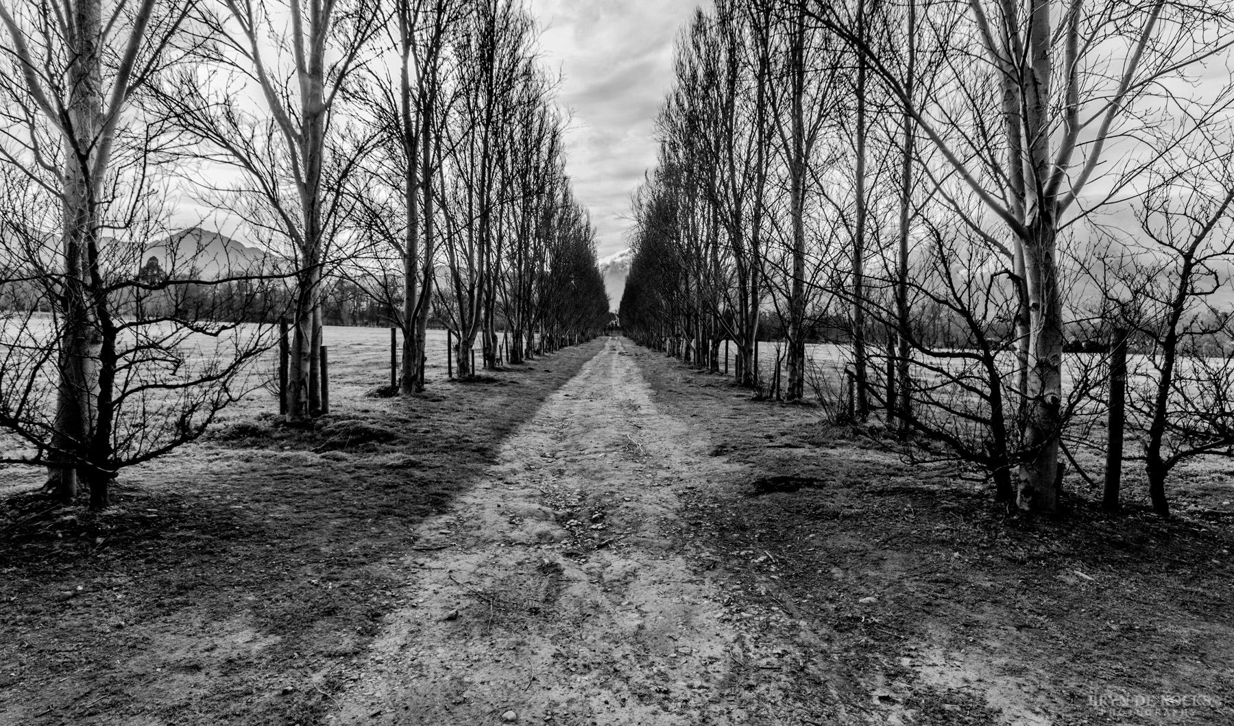 Dead Trees at Lourensford