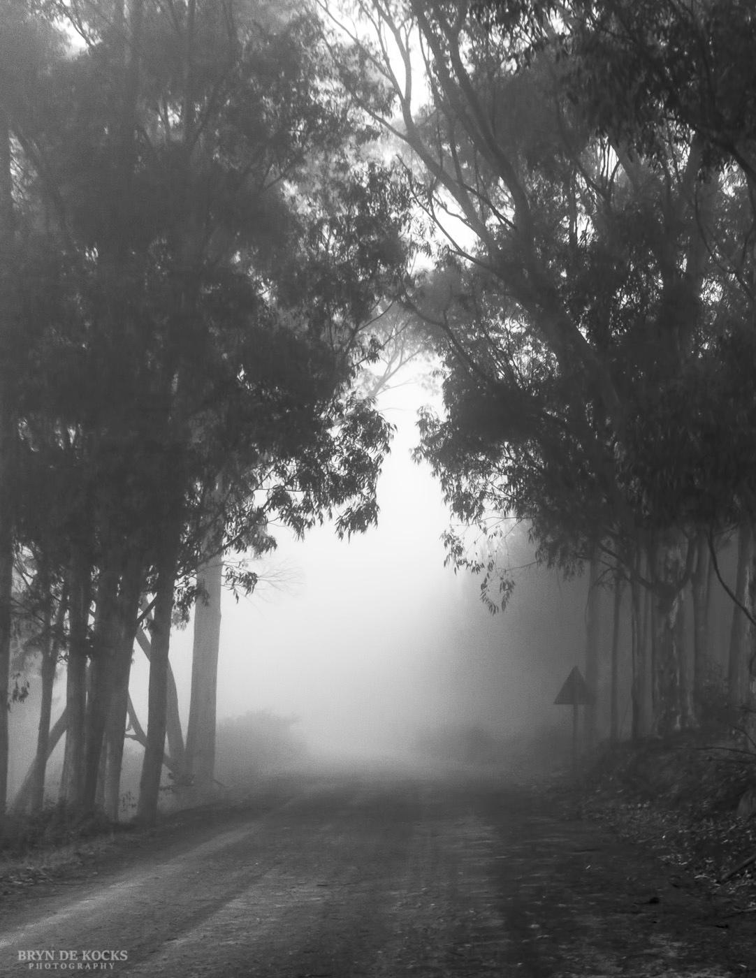 Foggy Landscape at Grootvadersbosch