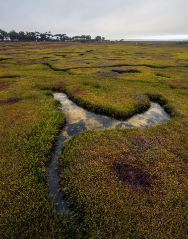 West Coast Landscape