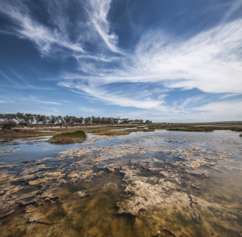 West Coast National Park Vertical Panorama