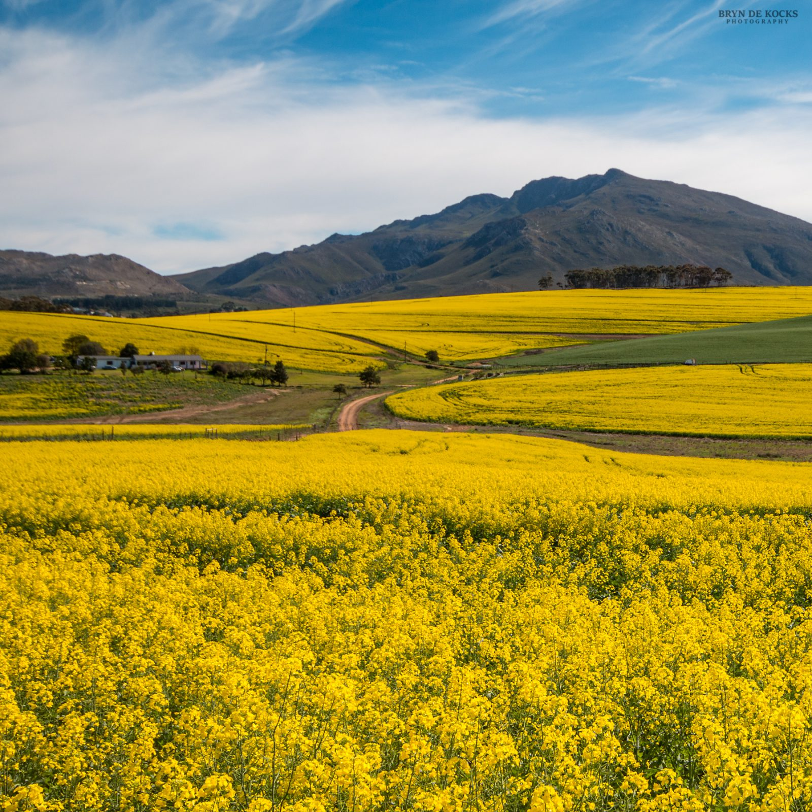 flowering overberg