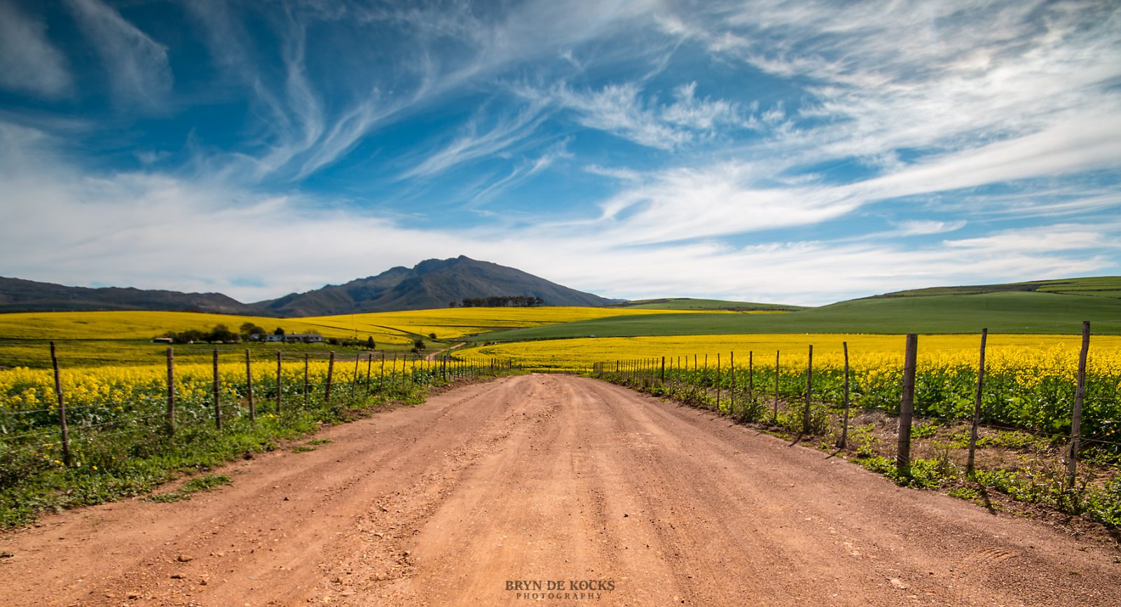 overberg flowering canola