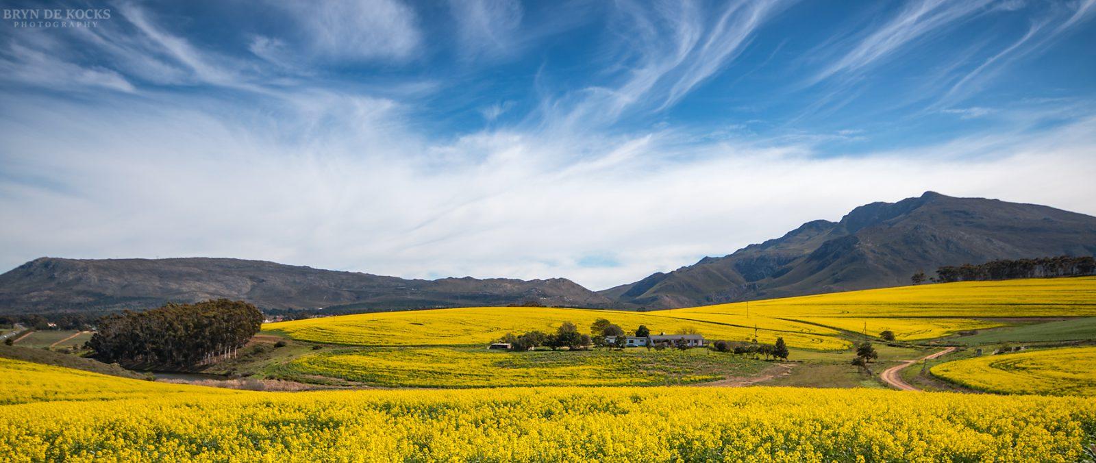overberg landscape flowers