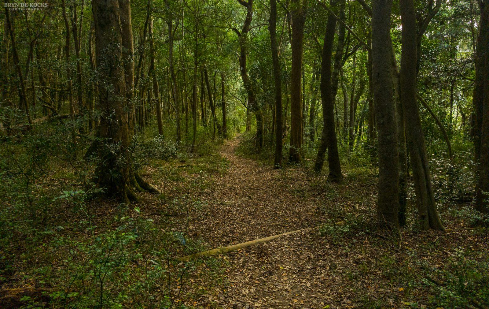 grootvadersbosch-forest